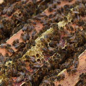 Miel de Toutes Fleurs 500 g En Vente Uniquement en Boutique